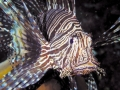 aundanao-fish.jpg